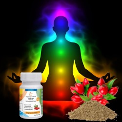 Rosehip Extract 20:1 Capsules - Joint Health