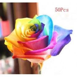 Colorful Rose Seeds 50 pcs